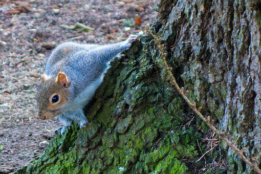 Tree, Rodent, Wood, Nature, Squirrel, Wildlife, Park
