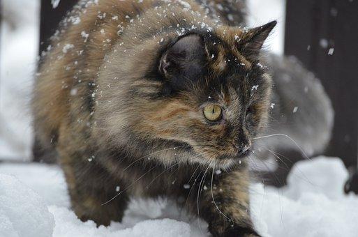 Cat, Mammal, Cute, Animal, Nature, Snow, Winter