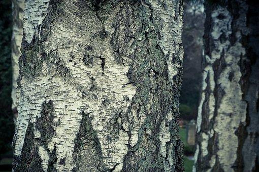 Bark, Tree, Nature, Wood, Tribe, Texture, Rau