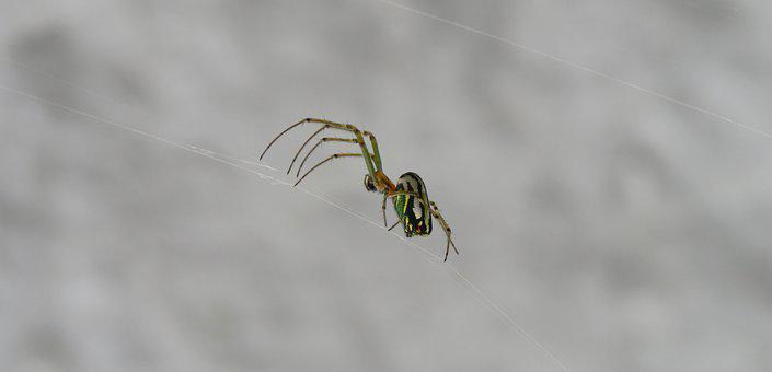 Nature, Spider, Insect, Animalia, Wild Life, Colombia