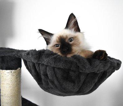 Charming, Cat, Mammals, Pets, Kitten, Den, Animal