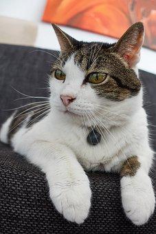 Cat, Sweet, Pet, Domestic Cat, Pretty, Eye, Cute