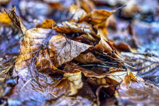 Leaves, Close, Macro, Autumn, Nature, Leaf, Season