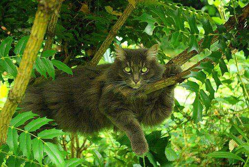Nature, Animal, Tree, Outdoors, Leaf, Cat, Posing