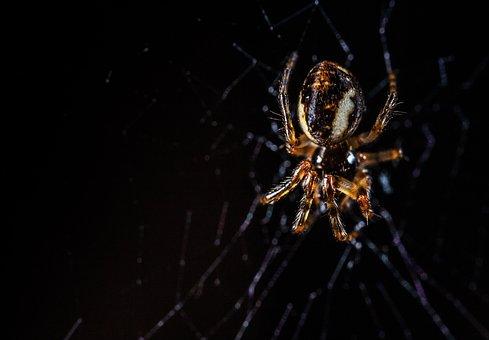 Macro, Arachnids, Spider, Spider Web