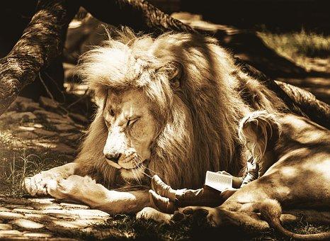 Mammal, Animal, Nature, Animal World, Lion, Big Cat