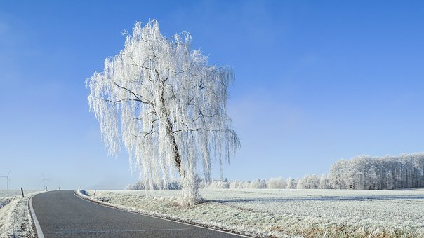 Nature, Winter, Snow, Landscape, Frost, Hoarfrost, Road