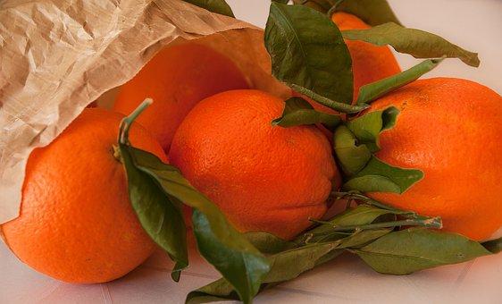 Fruit, Oranges, Citrus, Orange Tree