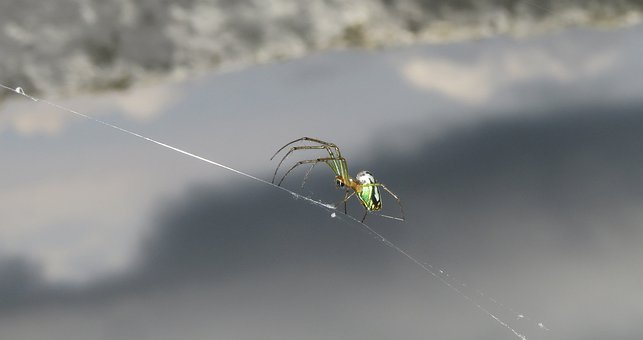 Nature, Insect, Spider, Outdoors, Colombia