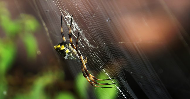 Spider, Insect, Nature, Arachnid, Outdoors, Armenia