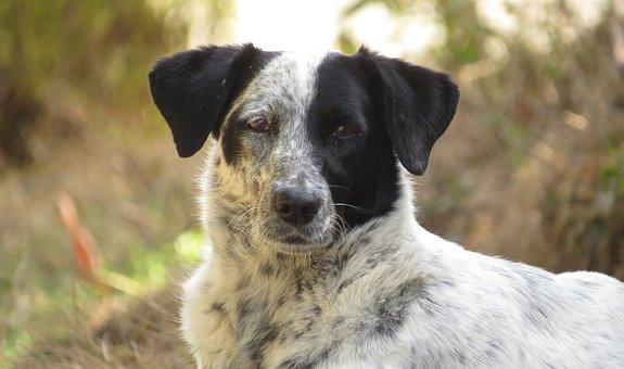 Animalia, Canis Lupus Familiaris, Nice, Pet, Mammalia