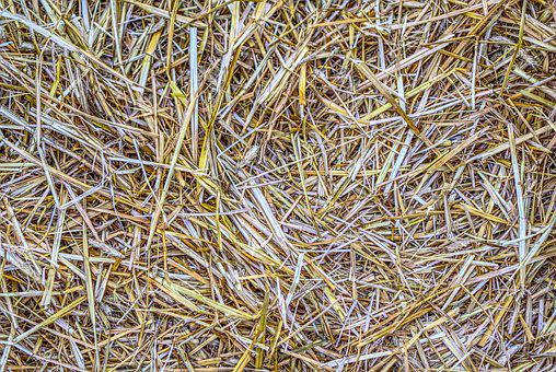 Straw, Structure, Texture, Background, Harvest
