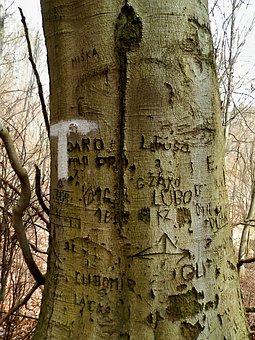 Tree, Love, Romance