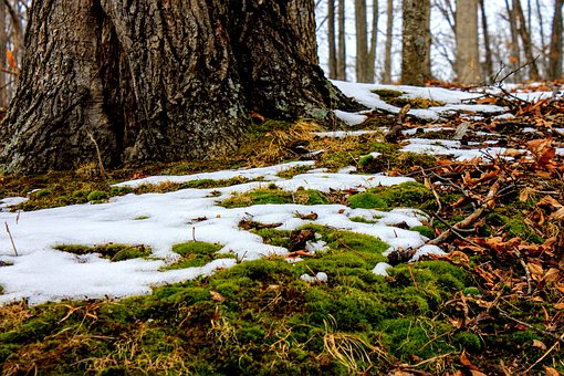 Nature, Wood, Tree, Landscape, Water, Snow, Moss