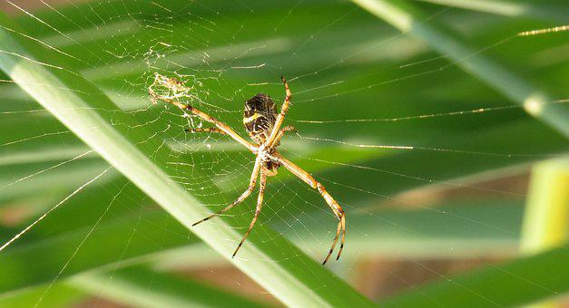 Spider, Insect, Arachnid, Web, Nature, Colombia