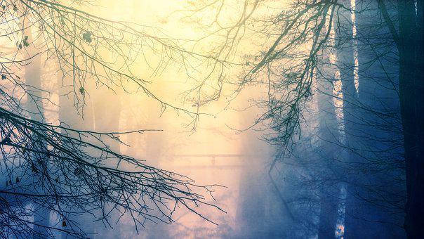 Nature, Dawn, Winter, Sky, Tree, Water, River, Bach