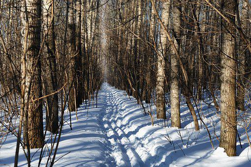 Snow, Winter, Wood, Coldly, Tree, Leann, Nature, Season