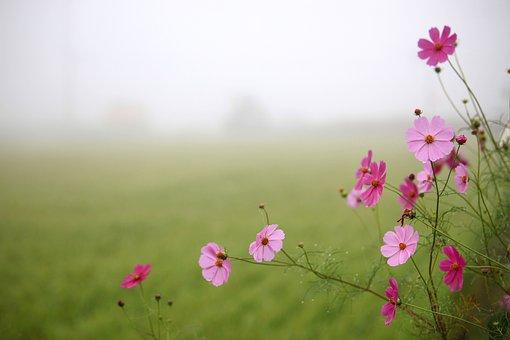 Nature, Summer, Flowers, S, Hayfields, Rural Areas