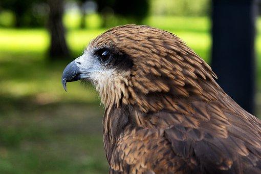 Living Nature, Nature, Bird, Animals, Outdoors, Beak