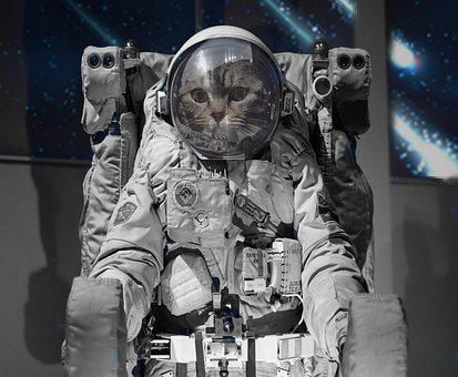 Astronaut, Military, Helm, Outfit, Space, Cat, Fantasy