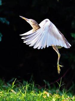 Nature, Outdoors, Bird, Grass, Summer, Wildlife, Water