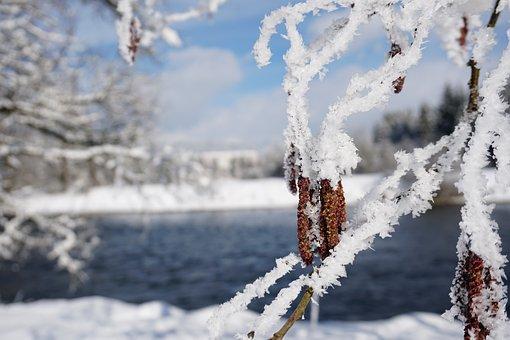 Snow, Winter, Frost, Cold, Frozen, River, Alder