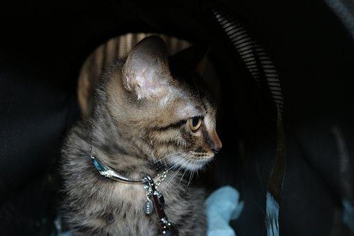 Cat, Portrait, Mammal, Animal, Cute