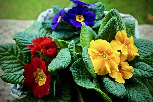 Cowslip, Spring, Leaf, Nature, Flower, Garden, Bloom