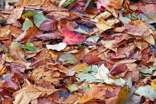 Fall, Leaf, Season, Nature, Color, Colorful, Yellow