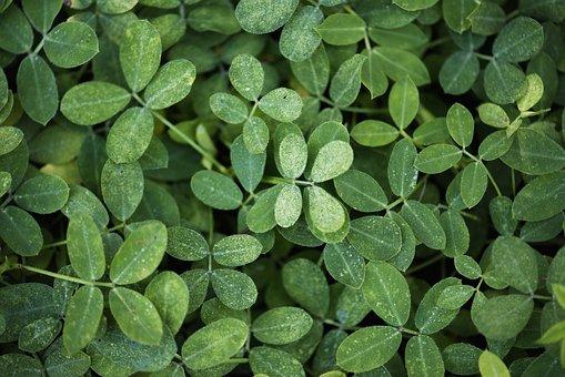 Leaf, Flora, Growth, Desktop, Nature, Background