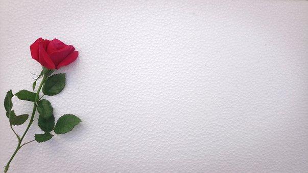 Flower, Desktop, Abstract, Pattern, Rose, Still Life