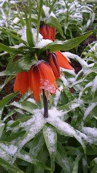 Nature, Flower, Flora, Leaf, Garden, Floral, Color