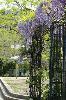 Tree, Garden, Flora, Park, Nature, Flower, Leaf