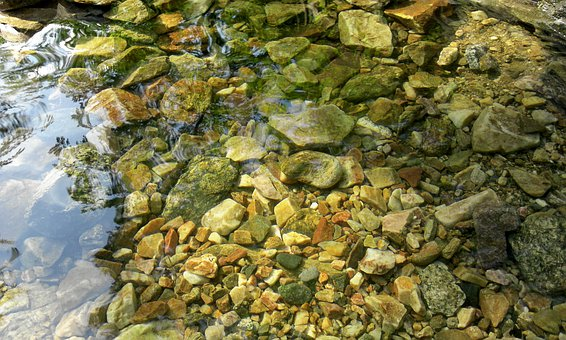 Nature, Plants, Leaf, Silage, Stone, Gravel, Streams