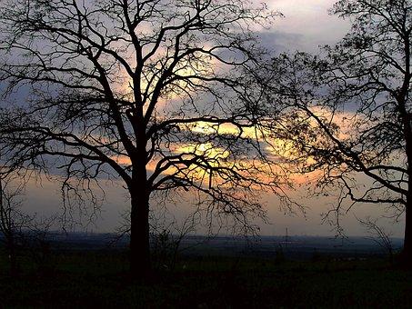 Tree, Landscape, Branch, Wood, Dawn, Nature, Sun