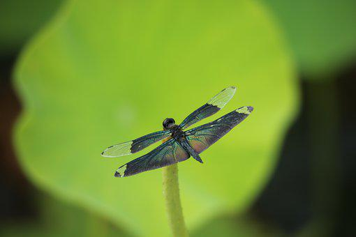 Insects, Nature, Outdoors, Leaf, Wildlife