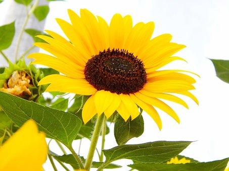 Nature, Plant, Summer, Flower, Leaf, Close, Floral