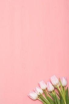 Flower, Nature, Tulip, Leaf Plants, Plant, Color