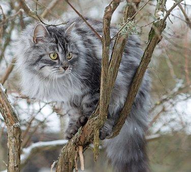 Cat, Animals, Portrait, Nature, Mammal