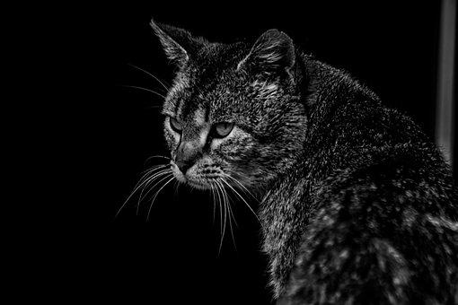 Cat, Cute, Portrait, Animal, Search