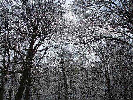 Tree, Wood, Branch, Winter, Fog, Weather, Nature