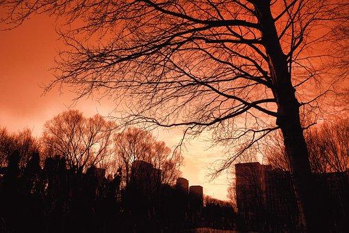 Skyline, Urban, Silhouette, Tree, Tree Silhouette