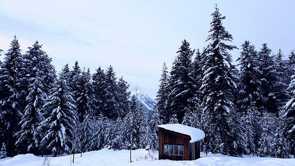 Snow, Winter, Cold, Wood, Frost, Trees, Greenhouse