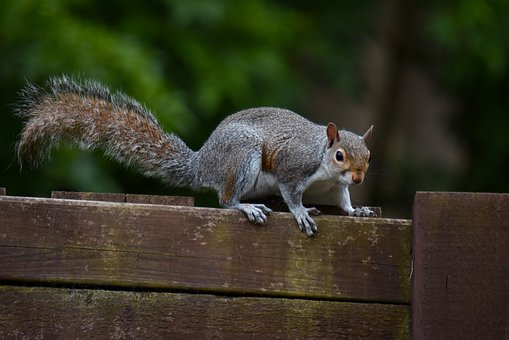 Mammal, Wildlife, Squirrel, Animal, Rodent, Nature