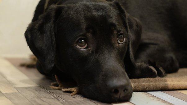 Dog, Cute, Animals, Mammals, Breed, Friendship