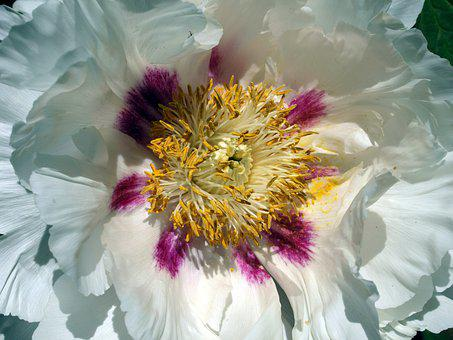 Flower, Nature, Beautiful, Color, Flora, Floral