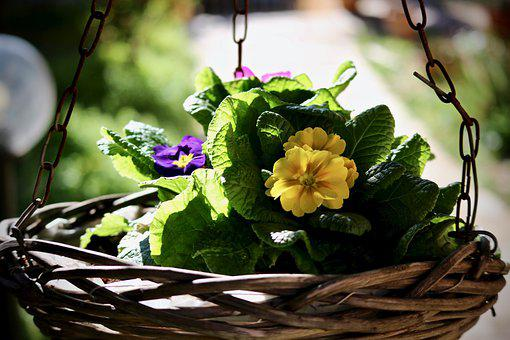 Spring, Cowslip, Flower, Leaf, Nature, Basket, Garden