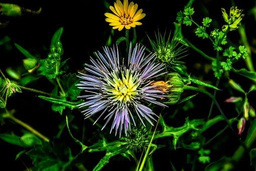 Nature, Plant, Flower, Summer, Leaf, Garden, Vivid