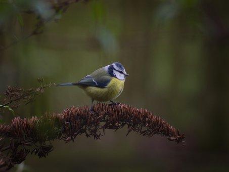 Bird, Animal World, Nature, Animal, Feather, Bill, Wild