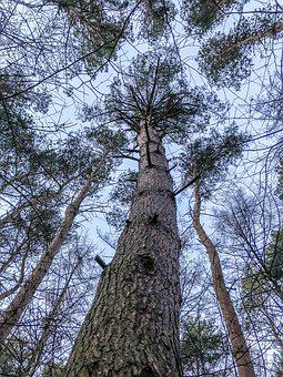 Tree, Wood, Nature, Branch, Season, Environment, Winter